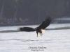 Eagles-2015-b